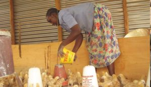 Betty Anyango of Value Girls tends to chicks in a demo house